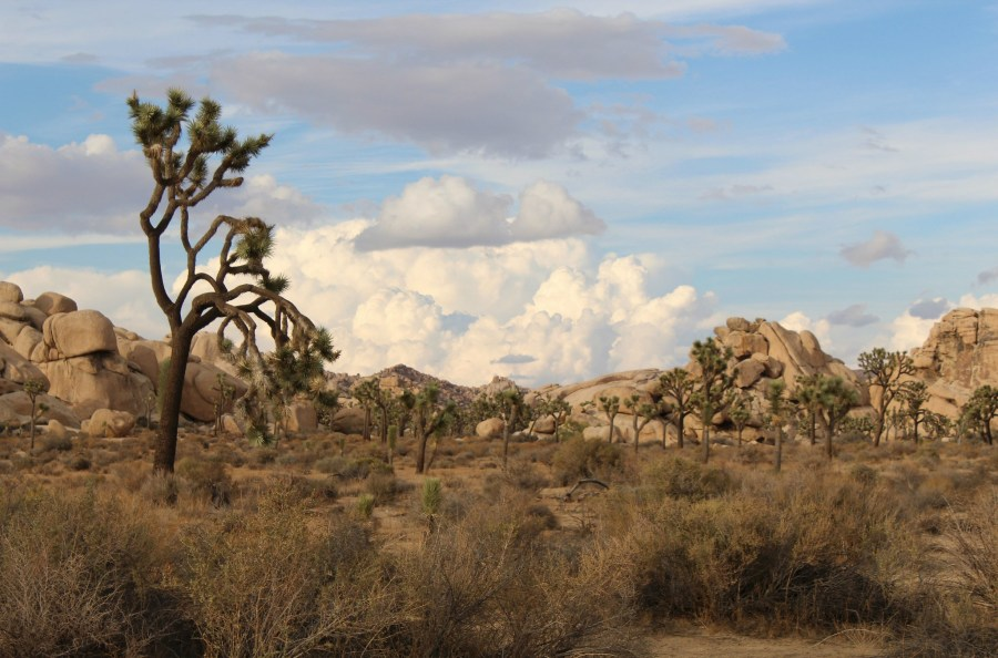 Southern California's Joshua Tree National Park is, along with the Grand Canyon, one of 11 protected nature areas of the U.S. included in a study on the prevalence of microplastics in remote areas. Angel La Canfora, Flickr