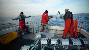 Underwater cameras being placed into the ocean for Star of the South exploratory fish surveys.